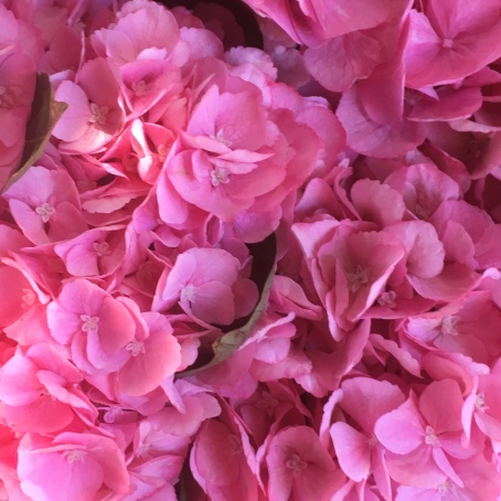 Pink blomster